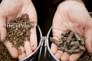 Beet Pulp Pellets For Cattle And Horse Feeding