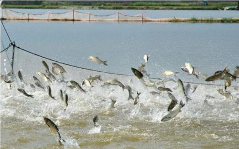 fishery farming
