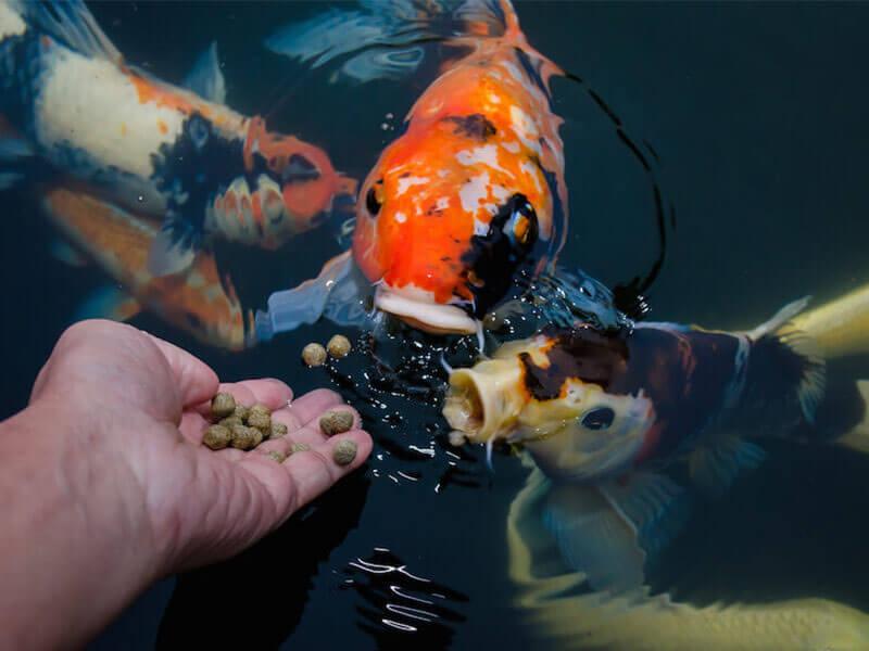 fish feed pellets for farming